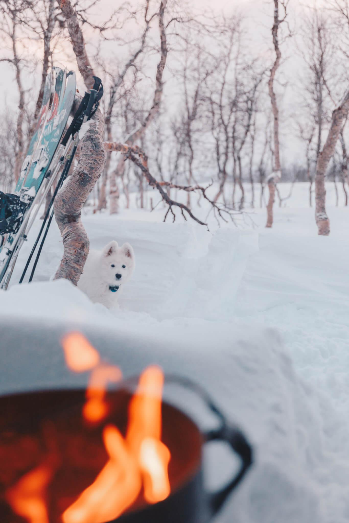 Vit hundvalp i snö tittar på eld.