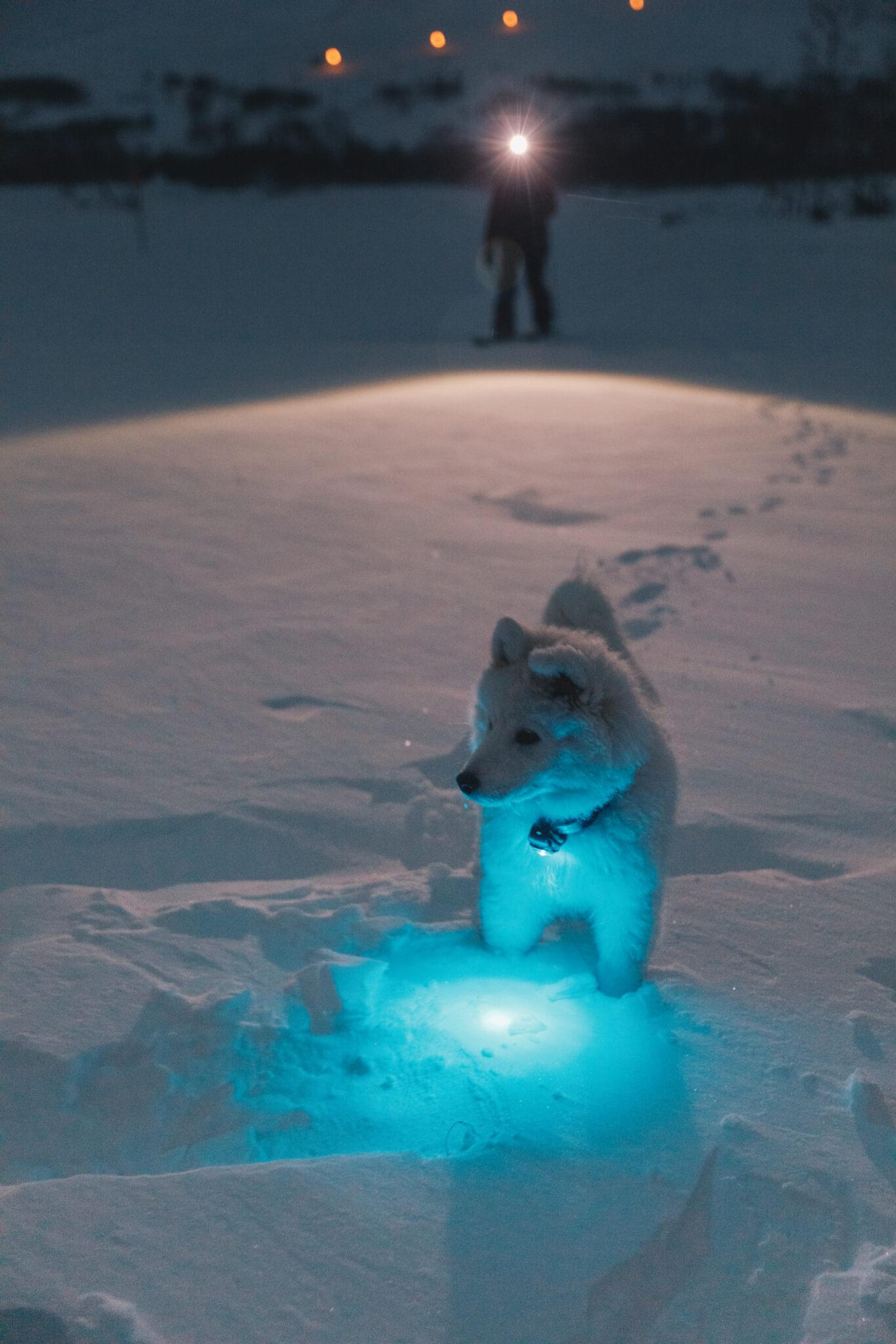 Hundvalp har lampa runt halsen i snö.
