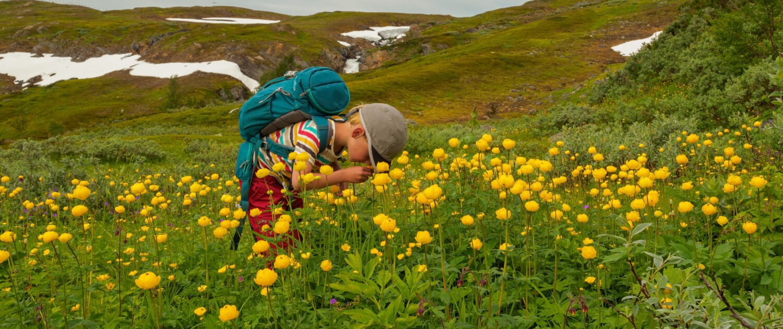 Barn bland smörbollar (gula blommor).